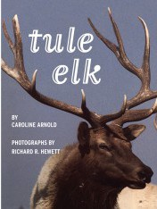 Tule Elk e-book design